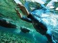 0105_Zajo_swimming